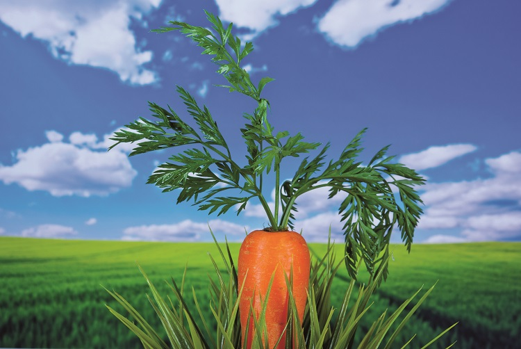 Se la verdura salverà la Terra