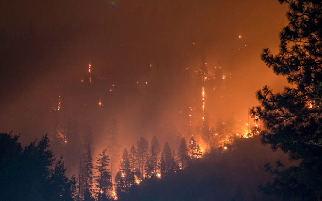 Allarme ambientale: siamo ancora in tempo per salvare il mondo?
